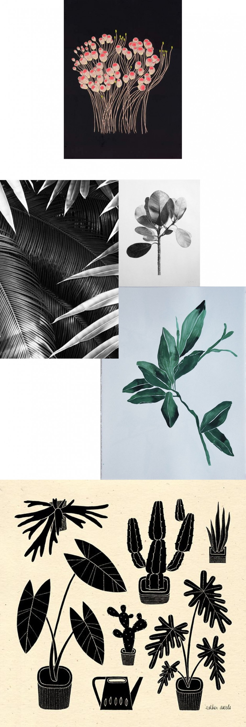 botanika2